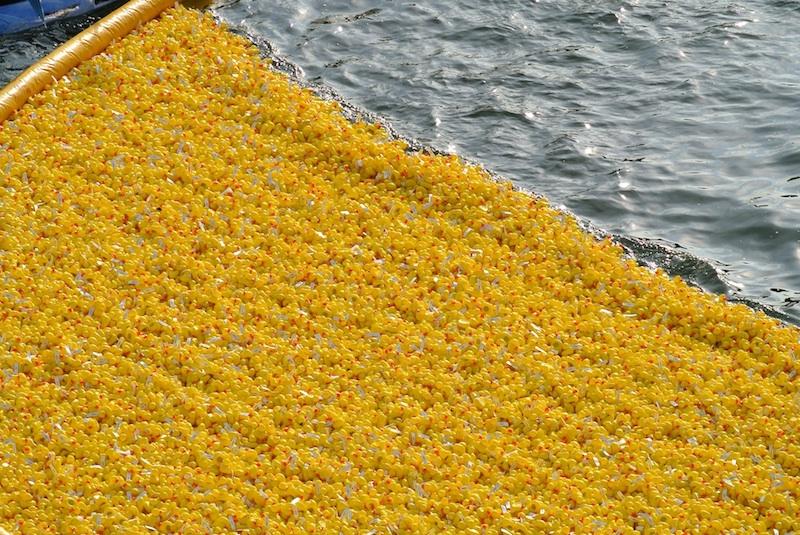 patos de plastico en la ría de Bilbao